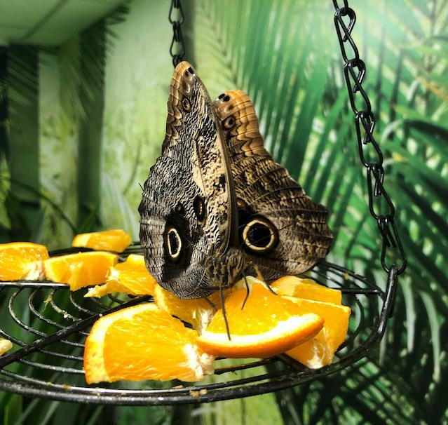 Butterfly_Garden_Tallinna_2