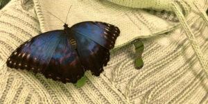 Butterfly_Garden_Tallinna_3