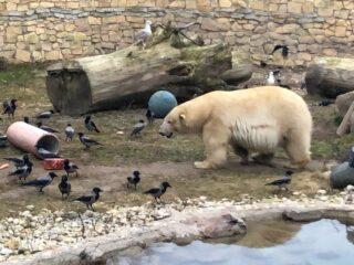 Tallinnan eläintarha