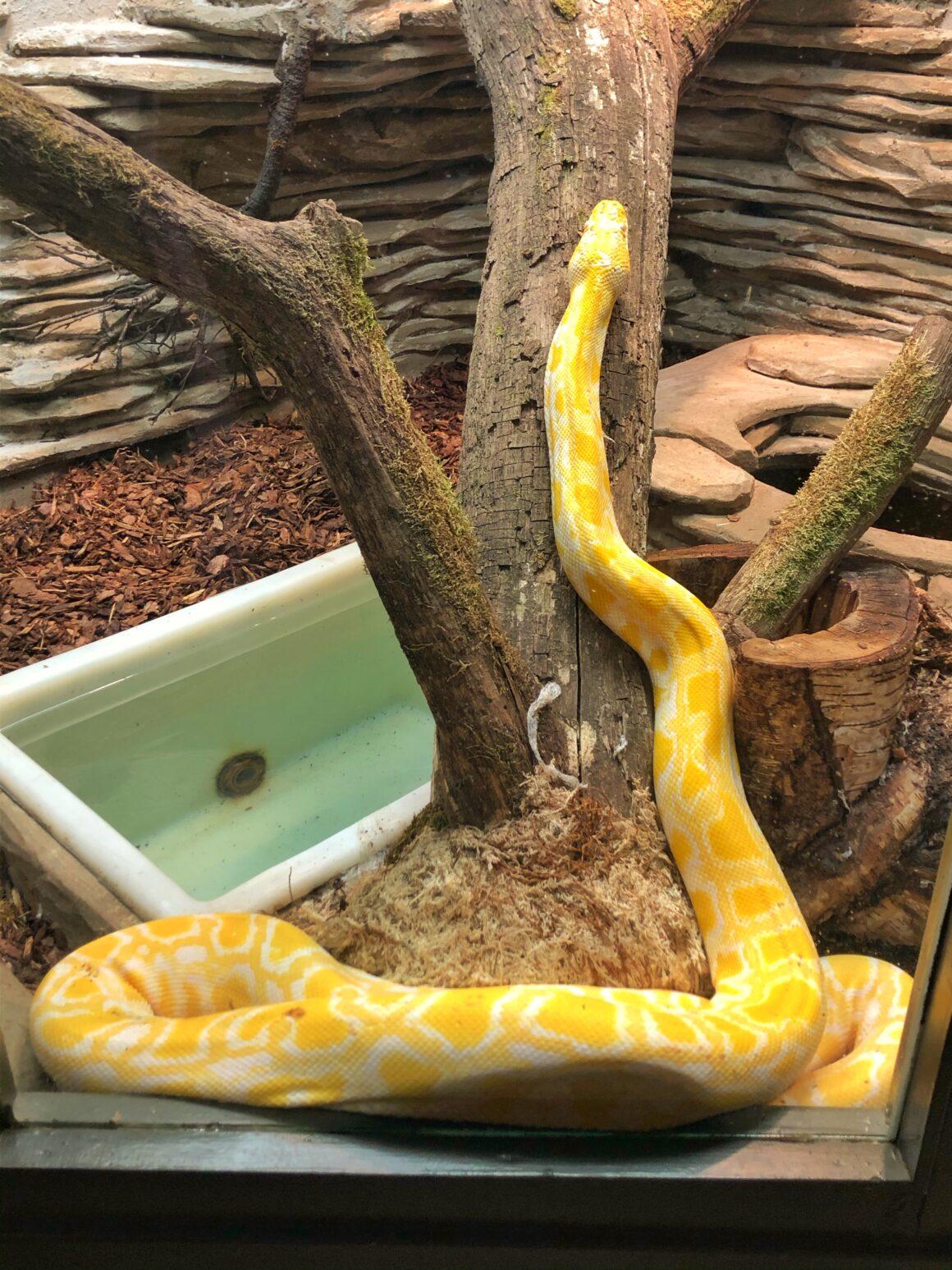 Käärme Tallinnan eläintarhassa