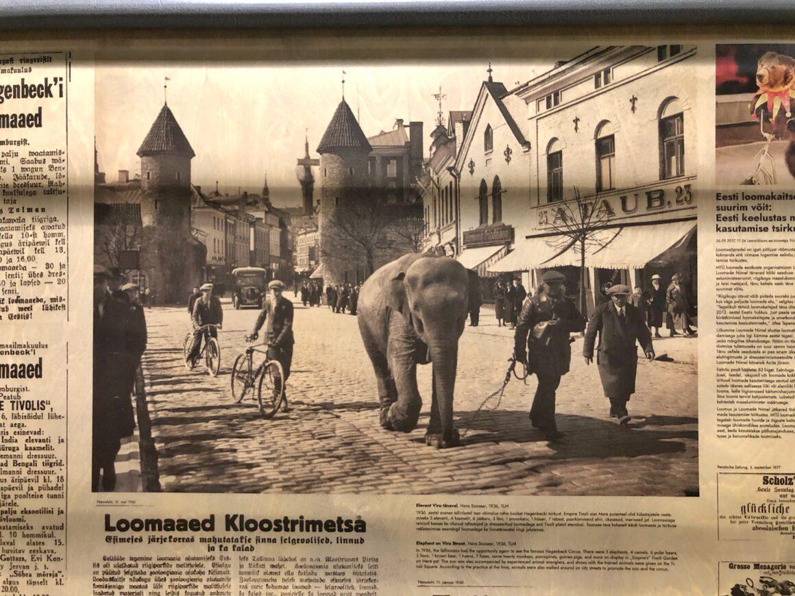 Kuva elefantista Viru-kadulla
